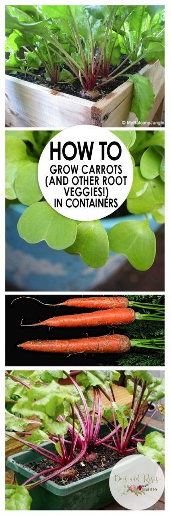 How to Grow Carrots (and Other Root Veggies!) In Containers| Container Gardening, Container Gardening Tips and Tricks, How to Grow Root Vegetables, Growing Root Vegetables, Gardening Hacks, Gardening 101, Indoor Gardening, Container Gardening Indoors, Popular Pin #vegetablegardeningideasroots