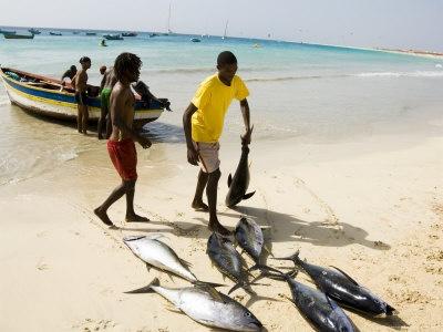 fishermen catching fish from Ponta Preta beach, Cape Verde  http://www.hotklix.com/content/Lifestyle/Wellness/Online-Tri-Nation-Fishing-Tournament-IfishO