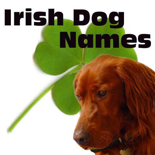 irish dog names female