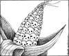 Las leyes de bioseguridad en América Latina. Un visión desde la ecología política. Boletín N° 481 de la RALLT