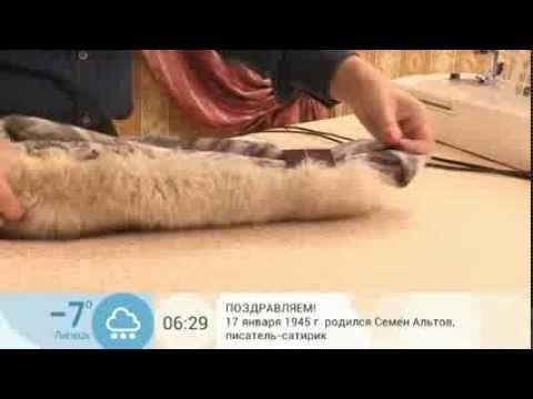 Меховой воротник, как подготовить мех - YouTube