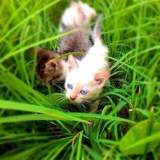My baby persian