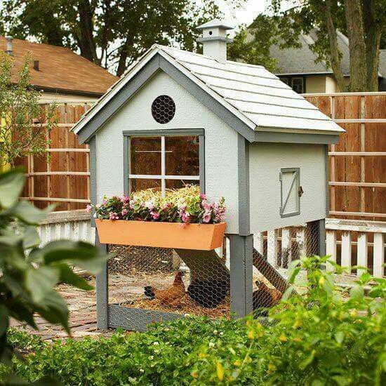 1000 ideas about small chicken coops on pinterest for Cool chicken coop plans