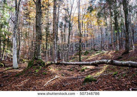 glimpse g magic autumnal forest