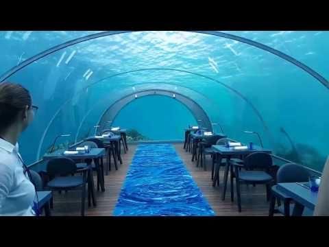 Best Underwater Restaurant Ideas On Pinterest - Take a look inside europes first underwater restaurant