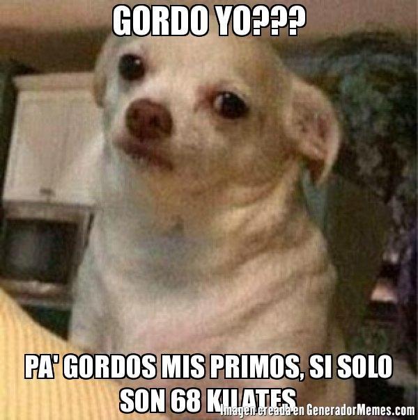 GORDO YO??? PA' GORDOS MIS PRIMOS, SI SOLO SON 68 KILATES  - Meme perro chihuahua enojado