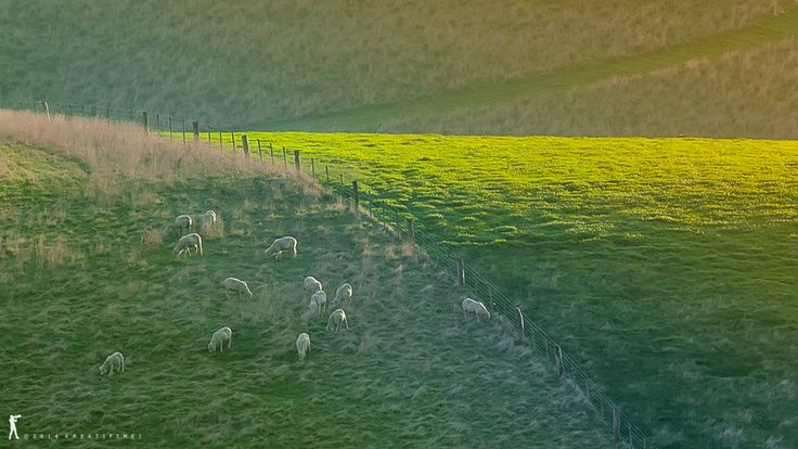 Grazing by IGCreative Image on 500px