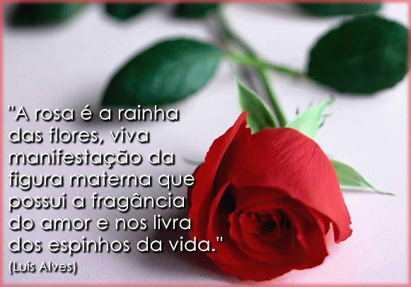 rosas pra o dia das mães, dicas de como escolher