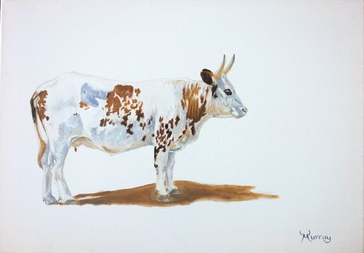 Nguni Cow, oil painting by Murray www.nguniart.co.za