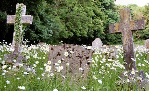 Cemitérios brasileiros têm problemas ambientais