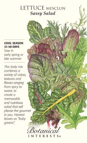 Sassy Salad Mesclun Lettuce Seeds - 12 grams