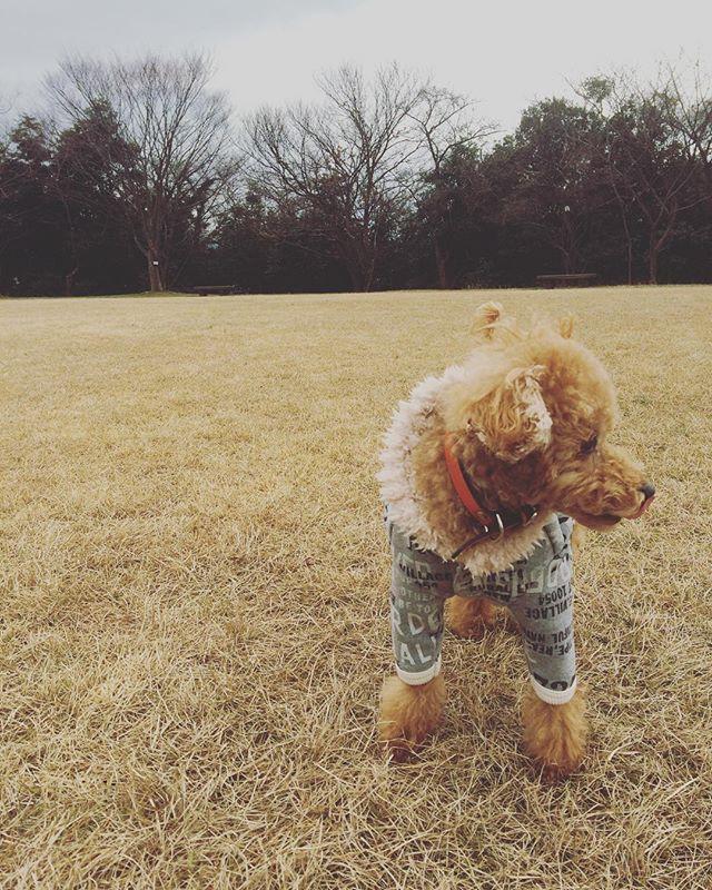 。。 今日のお散歩も寒かったね⛄️ . . . #トイプードル#トイプードル多頭飼い #タイニープードル#小型犬#わんちゃん #わんちゃんとの生活 #愛犬#家族#寒い時は#A.U.S#ドッグウエア#もこもこパーカー #toypoodle#toypoodlelove #toypoodlered #dog #ig_japan #today #mocomoco#family