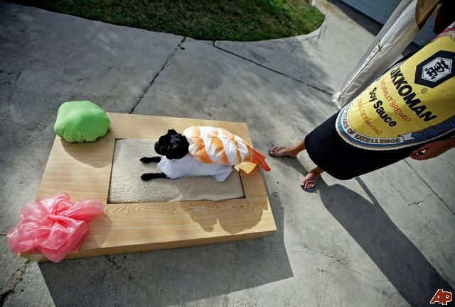 Sushi costume #Animal Hospital #Veterinarian #Pets #KAH #Vet #FrederickMaryland #Costumes #Halloween #Sushi