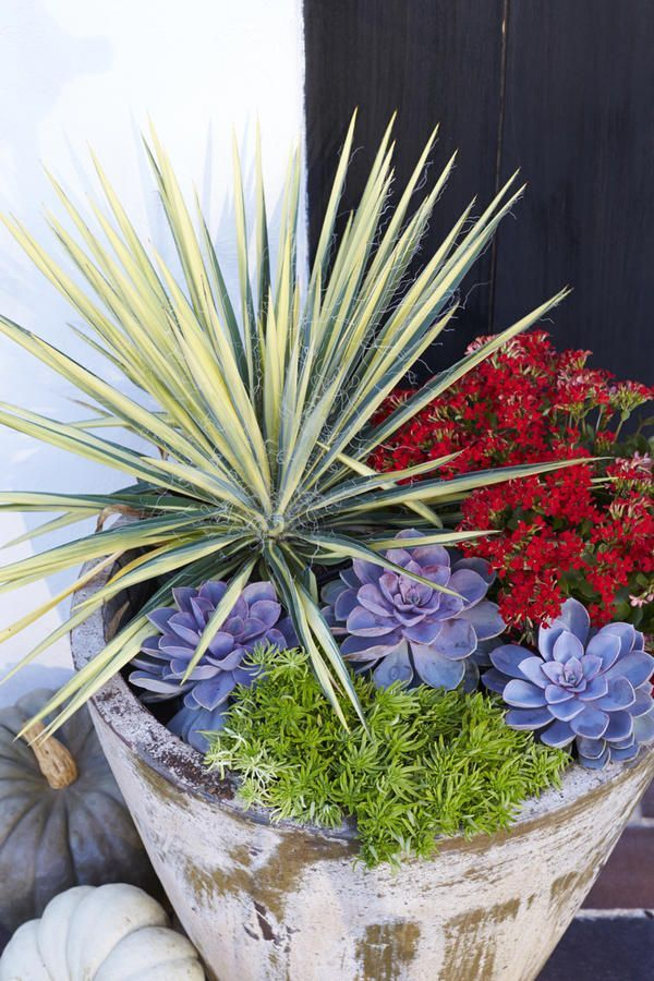 Southwest Mix - Heat-Tolerant Container Gardens for Sweltering Summers - Southernliving. This container is inspired by the state of Texas and combines heat-resistant plants with varied foliage textures, shapes, and colors for a dynamic and eye-catching combination.