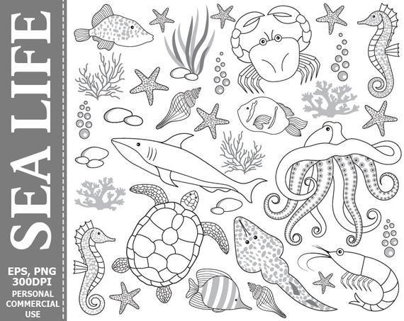Digital Sea Life Clip Art Underwater Fish Crab Octopus Etsy Turtle Images Sea Turtle Images Clip Art