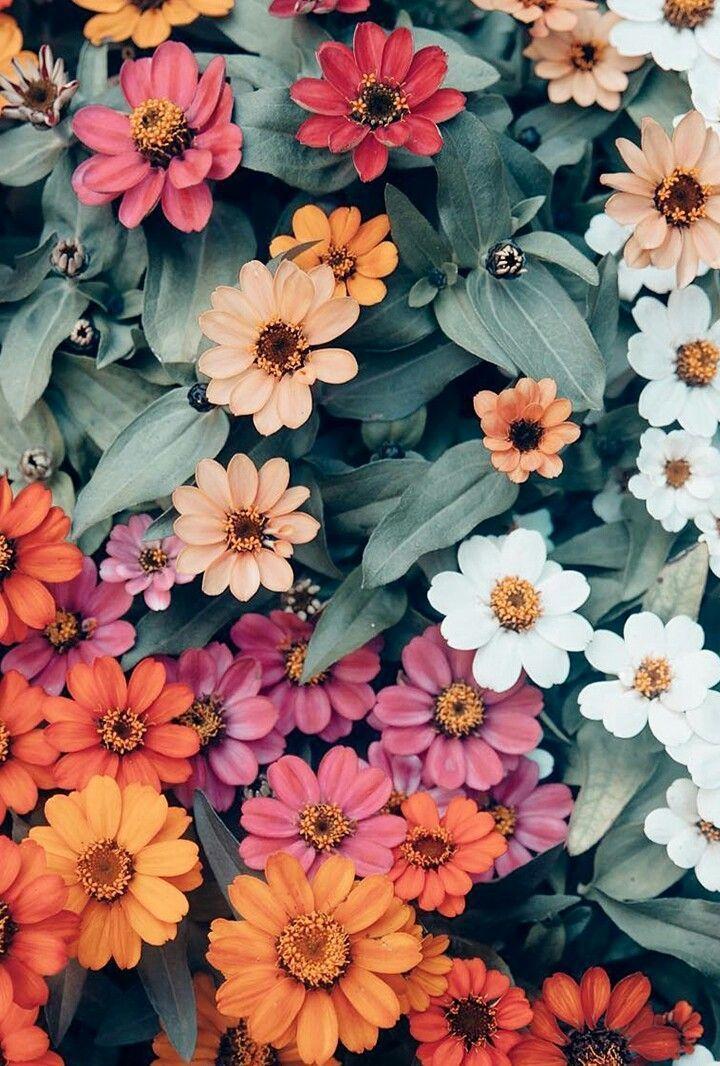 Pin On Still Life Cute flower wallpaper for ipad