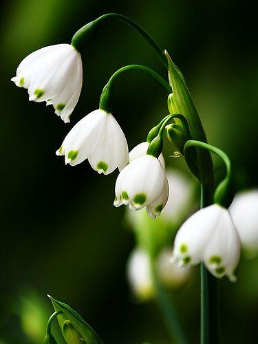 ~~Lantern Flowers by YGLow~~
