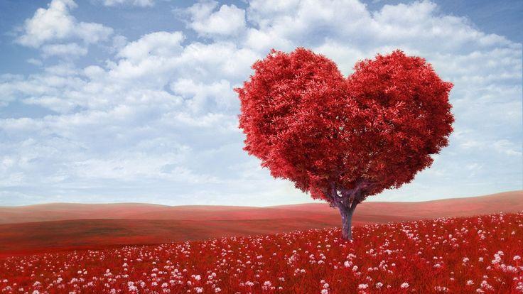 Jardim do amor :: És um romântico incurável? Então este artigo é para ti. Aqui encontrarás vários fundos de ecrã românticos que vão exprimir o teu estado de espírito de uma forma fenomenal.