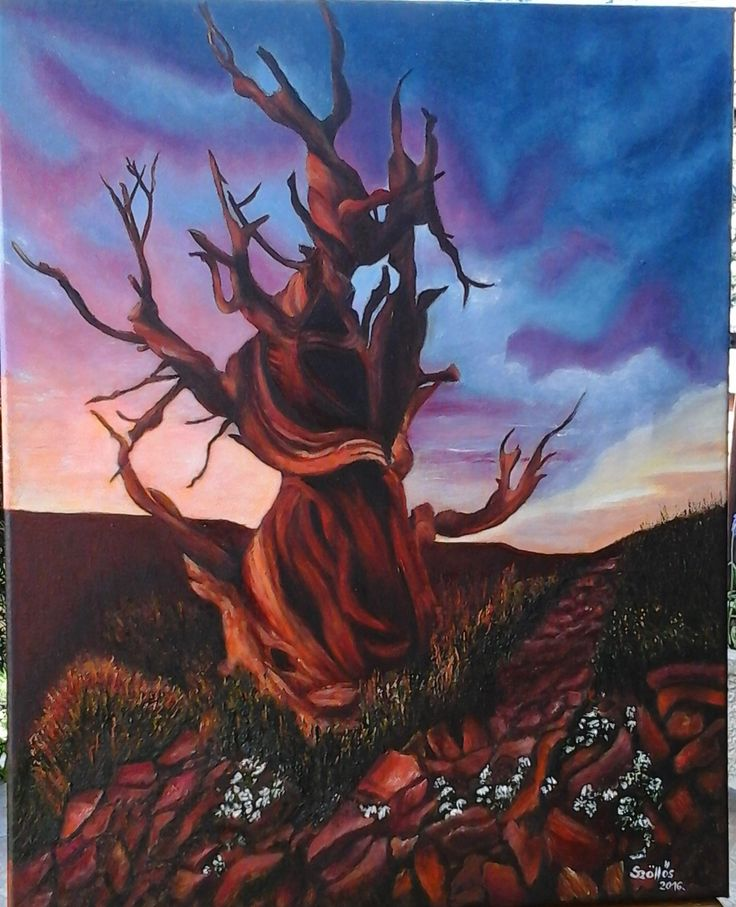"""created by:  Szöllős Éva -""""Methuselah"""" oil, 40x50 cm canvas (At 4,841 years old, this ancient bristlecone pine is the oldest known non-clonal organism on Earth. Located in the White Mountains of California, in Inyo National Forest, Methuselah's exact location is kept a close secret in order to protect it from the public.) (original photo:designtaxi.com)"""