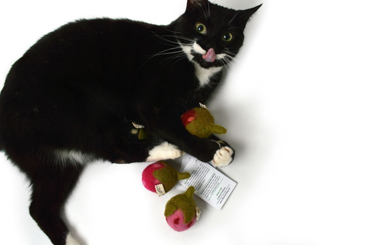 It's strawberry season at meowbox!  Get your berries for kitty at the meowbox shop now!