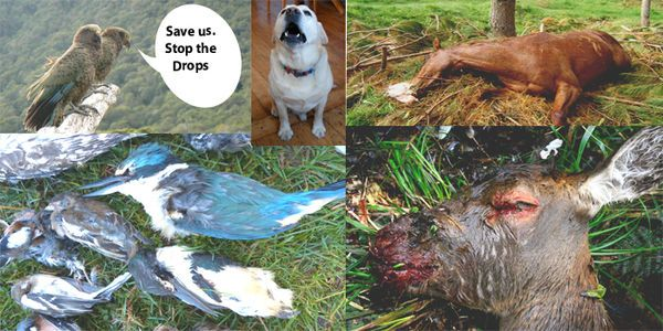 STOP THE DROPS! SAVE ANIMALS FROM TORTUROUS 1080 POISON DEATHS.