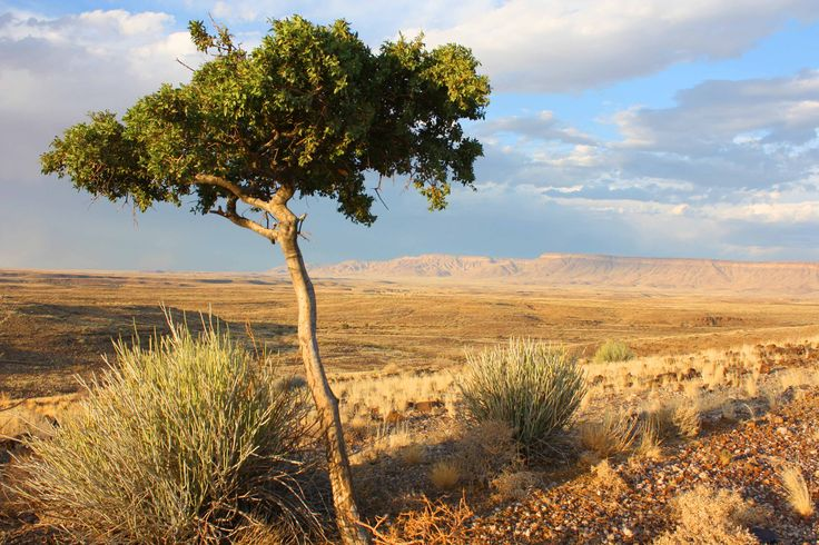The Gondwana Canyon Park offers endless vistas! #gondwana #park #canyon #namibia #vista #travel http://www.gondwana-collection.com/blog/index.php/re-wilding-land-story-gondwana-canyon-park/