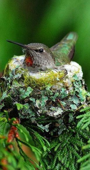 Pretty Birds Beautiful Birds Animals Beautiful Beautiful Creatures Bird Nests Bird