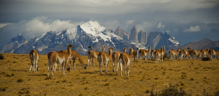 Torres del Paine, Chilean Patagonia  ©R.Valentine Atkinson