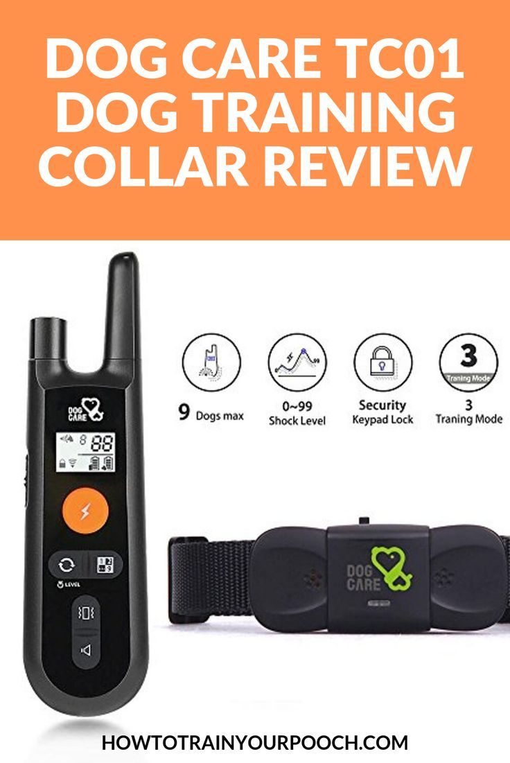 Best Dog Training Collars Of 2019 Complete Reviews With
