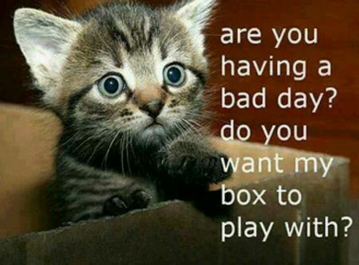 Bad Day Meme Funny : Best had a crappy day images funny stuff