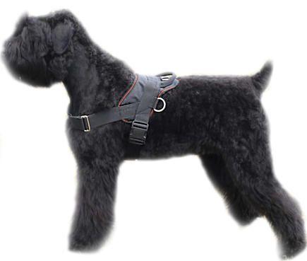 Black Russian Terrier,Chornyi,Terrier Noir Russe,Russian Bear Schnauzer,Black Terrier,Tchiorny Terrier