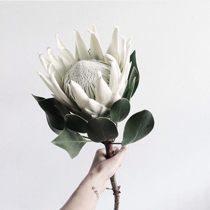 Devchonki Pozdravlyayu S Dnem Mamy Mamochki Mamuli Vsem Schastya By Faithlord In 2020 Protea Flower Bridal Wedding Flowers Garden Wedding