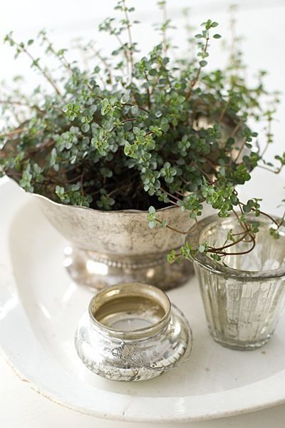 Farmhouse Decorating ~ Plant in Old Silver ~ Table Display