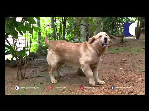 Dog Farming പടട വളരതതല   Success story in Kerala