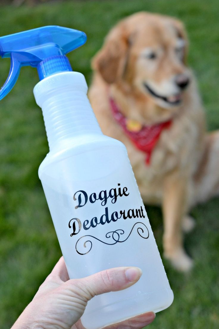 smelly dog, homemade cleaner and deodorizer
