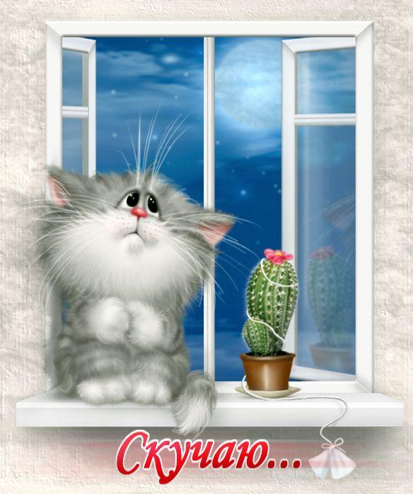 картинки я жду тебя кошки свой