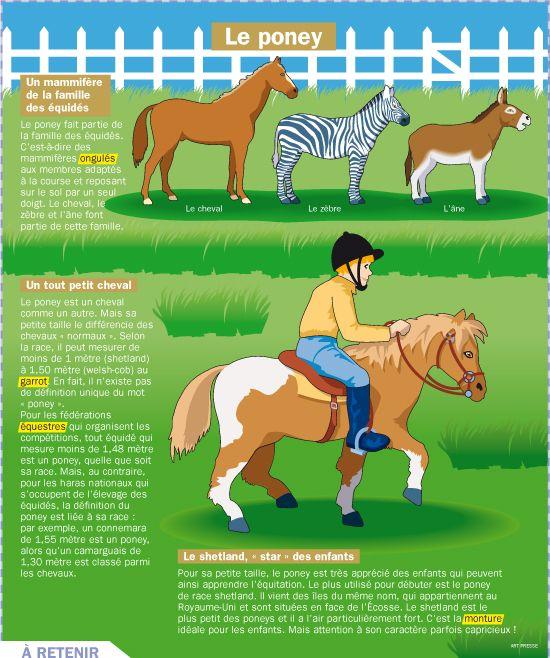 Fiche exposés : Le poney