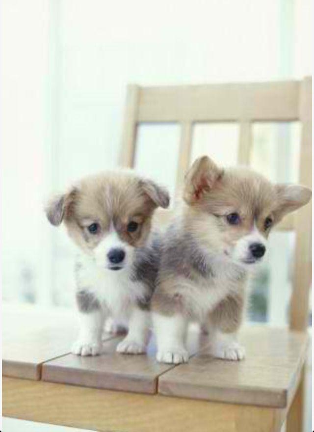 Les 862 meilleures images du tableau les chiens ne font pas des chats sur pinterest - Les chiens ne font pas des chats ...