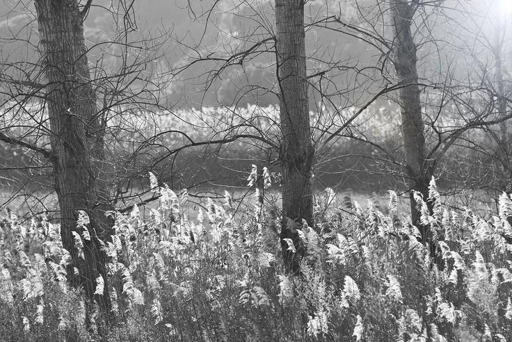 """""""Landscape_06"""" by Pedro Pinho, via 500px."""