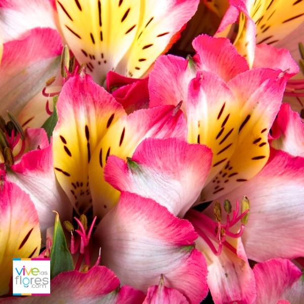 Los contrastes que puedes encontrar en Vivelasflores.com te sorprenderán a ti y a quien las envíes.