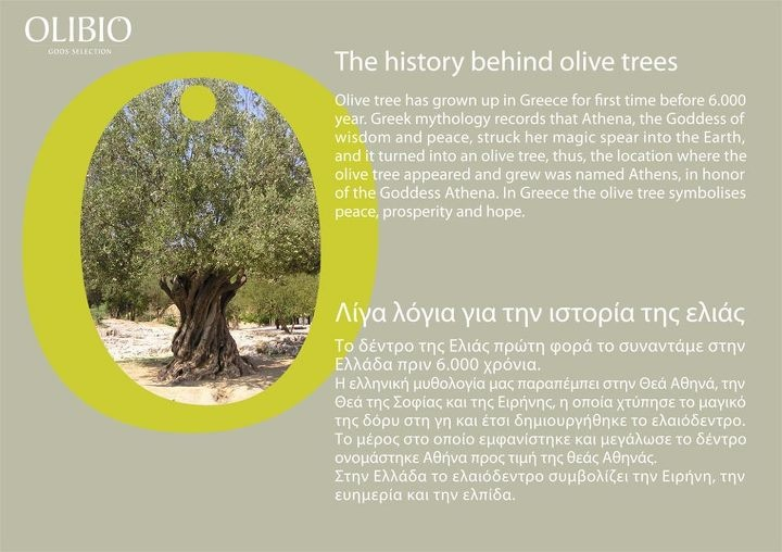The history behind olive trees