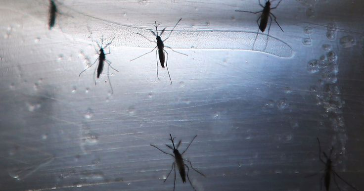 Four people in Florida likely got the Zika virus from local mosquitoes, state health officials said.