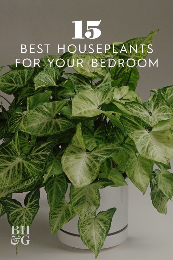 These Are The 15 Best Houseplants For Your Bedroom House Plants