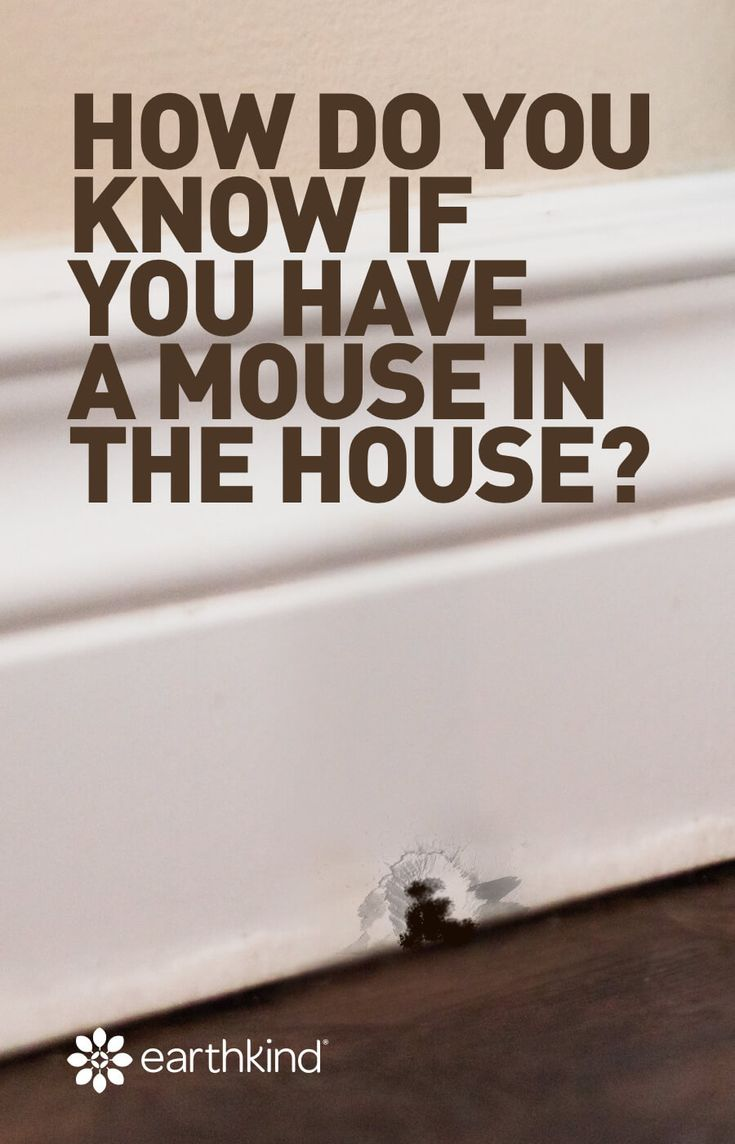 How do you know if you have a mouse in the house house