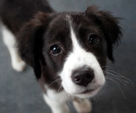 House training Puppies : The Humane Society of the United States