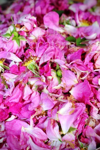 dulceata de trandafir