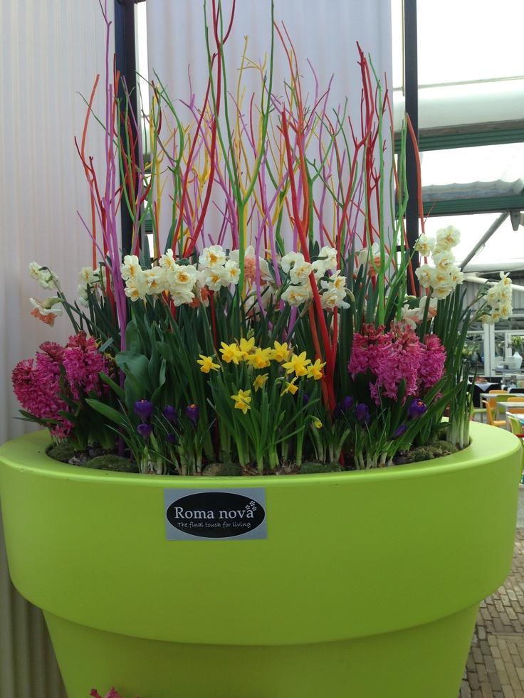 Kombinasi tanaman dalam satu pot besar untuk di dalam rumah