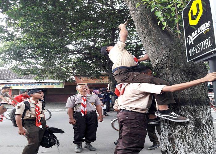 Cinta Lingkungan Cabuti Paku di Pohon