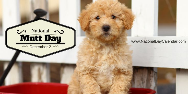 NATIONAL MUTT DAY Each year on December 2nd and July 31st, National Mutt Day is celebrated across the United States.  This day was created as a day to embrace, save and celebrate mixed breed dogs. ...