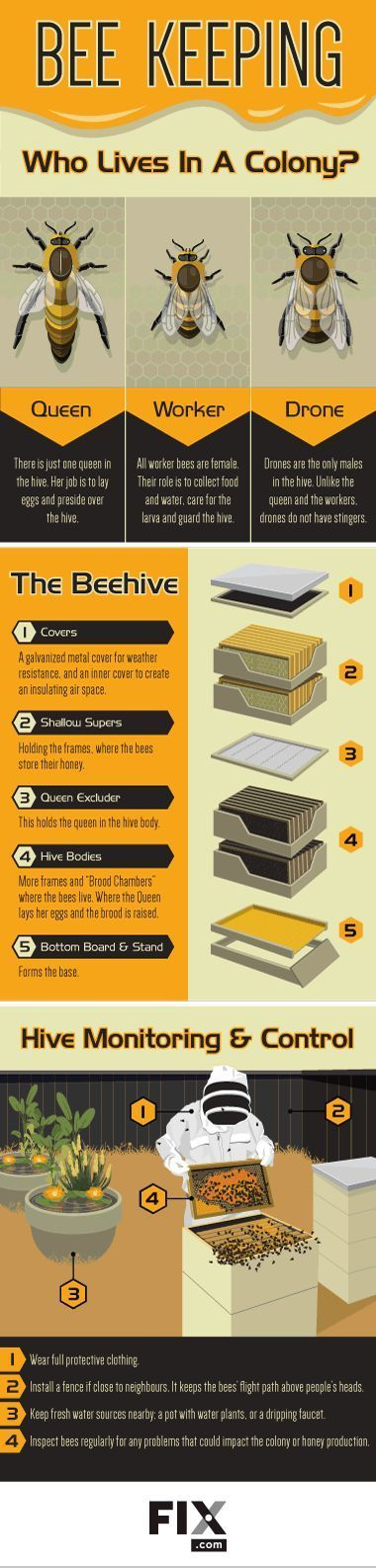 Bee Keeping: Become a Backyard Beekeeper [by FIX -- via #tipsographic]. More at tipsographic.com